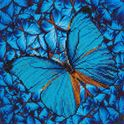 Picture of Diamond Dotz, Flutter By Blue, Design Size 12x12in