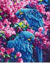 Picture of Diamond Dotz, Blue Parrots, Design Size 16.5x20.5in