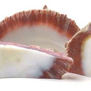 Picture of Rough Spiny Oyster Shell Slice