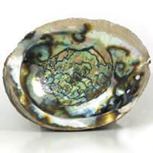 Picture of Rough Green Abalone Shell